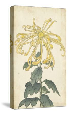 Elegant Chrysanthemums II--Stretched Canvas Print