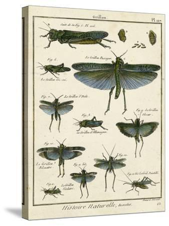 Histoire Naturelle Insects II-Diderot-Stretched Canvas Print