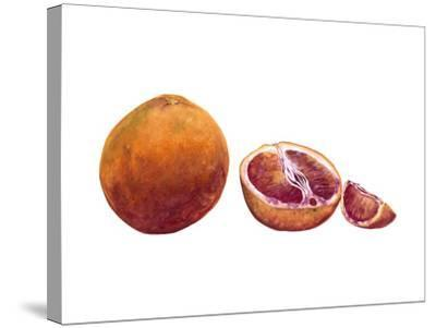 Watercolor Blood Orange-Michael Willett-Stretched Canvas Print