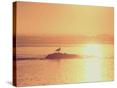 Kalaloch Sunset I Crop-Laura Marshall-Stretched Canvas Print