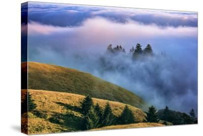 Magical Land of Fog and Light, Mount Tamalpais State Park, California-Vincent James-Stretched Canvas Print