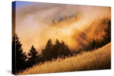 Fog and Light Collision Mount Tamalpais, Marin County, San Francisco-Vincent James-Stretched Canvas Print