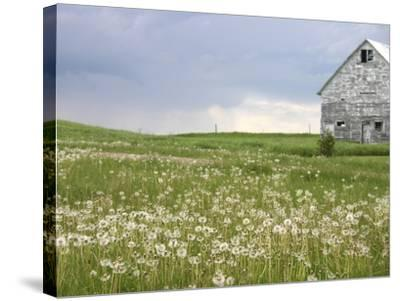 Barn Scape II-Ingrid Blixt-Stretched Canvas Print