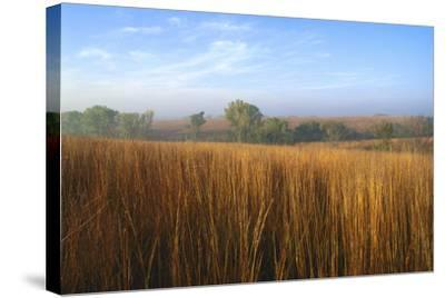 Tall Bluestem Grass Covers the Countryside-Michael Forsberg-Stretched Canvas Print