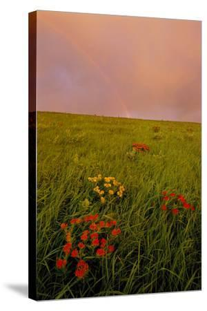 A Rainbow Above the Prairie at Sunrise-Michael Forsberg-Stretched Canvas Print
