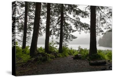 Along a Tree-Lined Trail, a Lookout Offers Views over the Water-Eric Kruszewski-Stretched Canvas Print