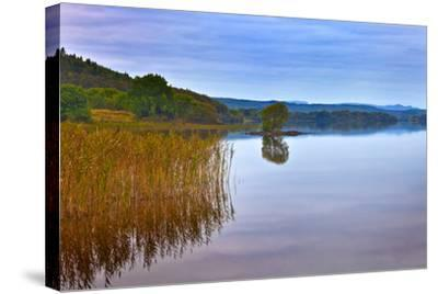 Reeds and an Islet in Lough Macnean, County Fermanagh, Northern Ireland--Stretched Canvas Print