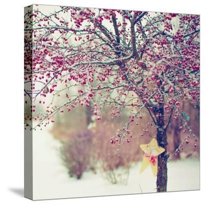 Winter Berries II-Kelly Poynter-Stretched Canvas Print