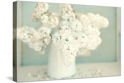 Gorgeous Whites-Sarah Gardner-Stretched Canvas Print