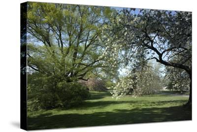 Royal Botanical Gardens, Kew, London. Spring-Richard Bryant-Stretched Canvas Print