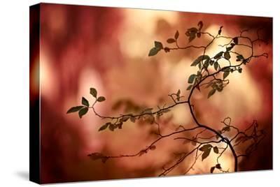 Haiku-Ursula Abresch-Stretched Canvas Print