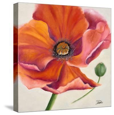 Poppy Flower II-Patricia Pinto-Stretched Canvas Print
