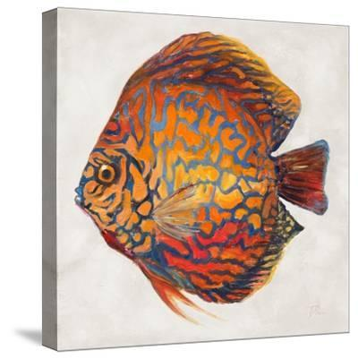 Little Fish II-Patricia Pinto-Stretched Canvas Print