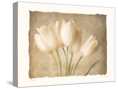 Aria I-Amy Melious-Stretched Canvas Print