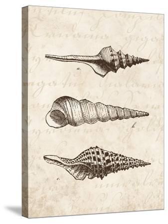 Elegant Shells II-N^ Harbick-Stretched Canvas Print