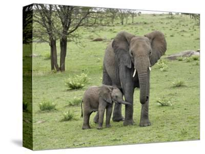 Female African Elephant with baby, Serengeti National Park, Tanzania-Adam Jones-Stretched Canvas Print