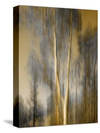 Composited Image of Trees-Diane Miller-Stretched Canvas Print