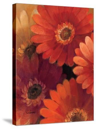 Garden of Gerberas II-Albena Hristova-Stretched Canvas Print