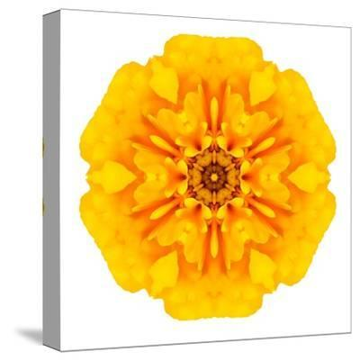 Yellow Concentric Marigold Mandala Flower-tr3gi-Stretched Canvas Print