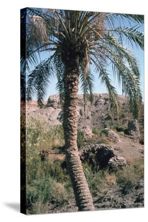 Palm Tree Below Lion of Babylon, Iraq, 1977-Vivienne Sharp-Stretched Canvas Print