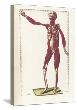 The Science of Human Anatomy by Bartholomeo Eustachi-Stocktrek Images-Stretched Canvas Print