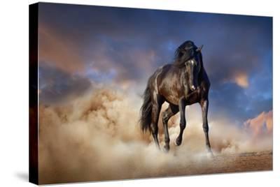 Black Stallion Horse-Callipso88-Stretched Canvas Print