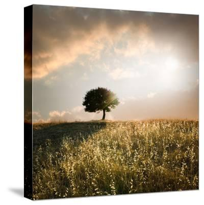 Solitary Oak Tree in the Sunset-ollirg-Stretched Canvas Print