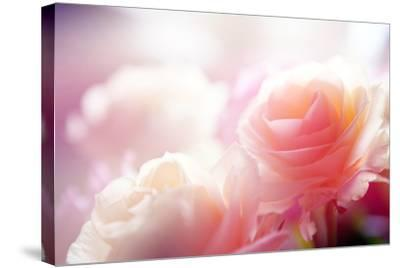 Beautiful Flowers Made with Color Filters-Timofeeva Maria-Stretched Canvas Print