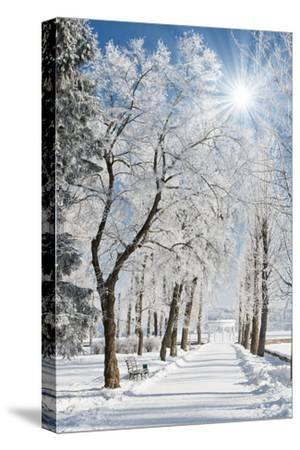 Beautiful Winter Landscape with Snow Covered Trees-Leonid Tit-Stretched Canvas Print