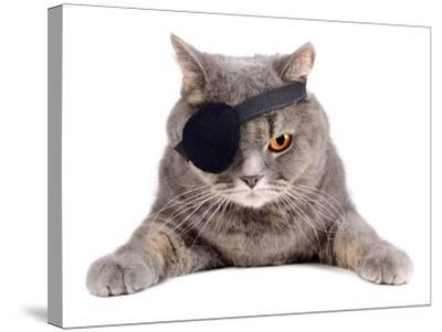 Pirate Cat- eAlisa-Stretched Canvas Print