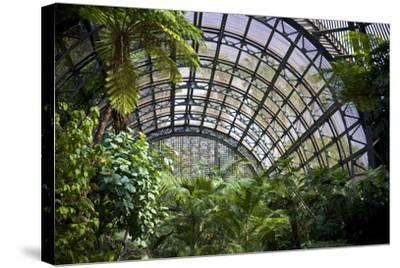 Inside the Botanical Building in Balboa Park in San Diego, California.  inside are over 350 Species-pdb1-Stretched Canvas Print