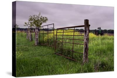 Texas Spring Field-Maarigard-Stretched Canvas Print