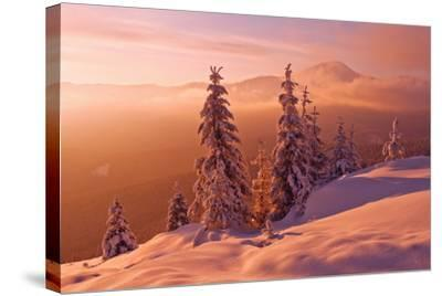 Snovy Trees on Winter Mountains-mr. Smith-Stretched Canvas Print