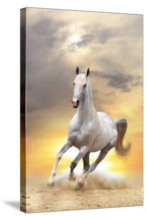 White Horse in Sunset-mari_art-Stretched Canvas Print
