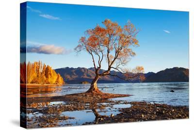 Autumn Landscape, Lake Wanaka, New Zealand-DmitryP-Stretched Canvas Print