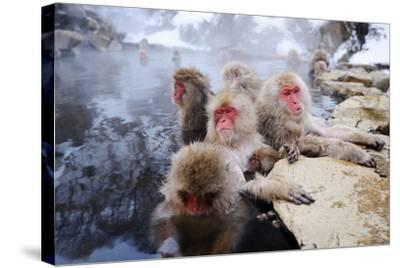 Japanese Snow Monkeys-SeanPavonePhoto-Stretched Canvas Print