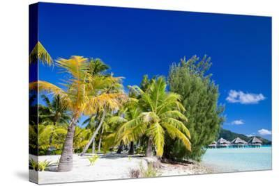 Beautiful Beach on Bora Bora Island in French Polynesia-BlueOrange Studio-Stretched Canvas Print