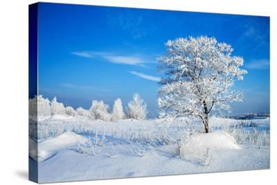 Winter Landscape-Yanika-Stretched Canvas Print