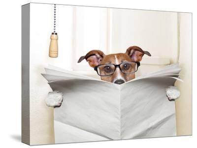 Dog Toilet-Javier Brosch-Stretched Canvas Print