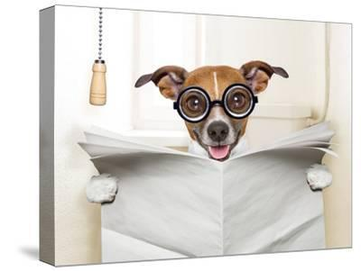 Dog Toilet-Javier Brosch-Stretched Canvas Print