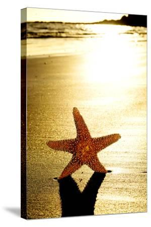 Seastar on the Shore of a Beach at Sunset-nito-Stretched Canvas Print