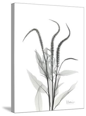 Wind Zip-Albert Koetsier-Stretched Canvas Print