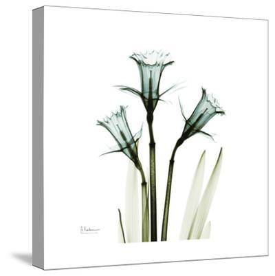 A Daffodil Day-Albert Koetsier-Stretched Canvas Print