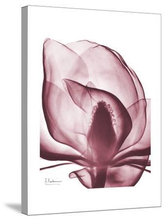 Marcela Magnolia-Albert Koetsier-Stretched Canvas Print