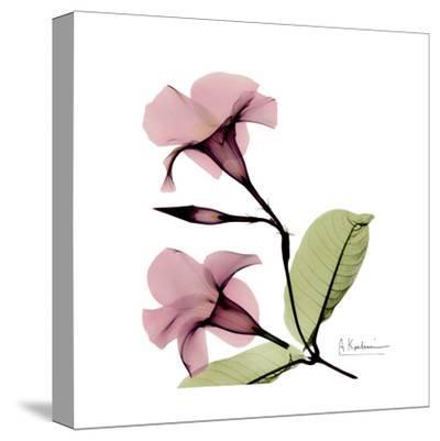 Mandelilla-Albert Koetsier-Stretched Canvas Print