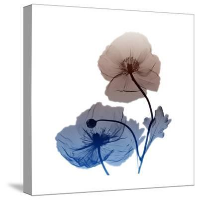 Iceland-Albert Koetsier-Stretched Canvas Print