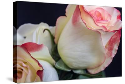 Soft Pink-Bob Rouse-Stretched Canvas Print