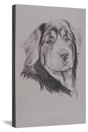 Tibetan Mastiff-Barbara Keith-Stretched Canvas Print