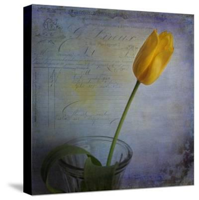 Tulip with Blue-Bob Rouse-Stretched Canvas Print