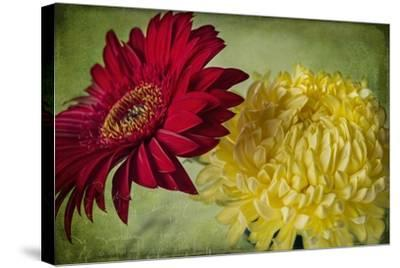 Red and Yellow-Bob Rouse-Stretched Canvas Print